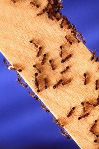 Tippek otthoni rovarirtáshoz